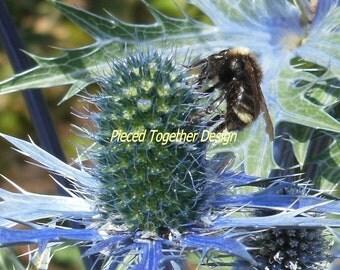 5 x 7 Photograph - Bumble Bee in the garden
