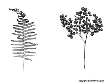 Botantical Prints, Flower Photography, Fine Art Photography, Fern and Berry Bush, Black and White  Photography, Home Decor
