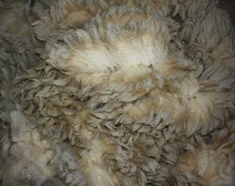 Romeldale Cross //Gorgeous Fleece