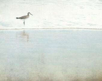 Sandpiper Photograh, Pale Aqua Blue, Beige Print, Ocean, Beach House Decor, Beach Bird Print, Reflecting Sandpiper 8x10 and up