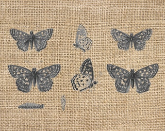 Vintage Antique Butterfly Drawings 300 dpi Digital Image Download Transfer For T Shirts Totes Napkins 143 Personal and Commercial Use