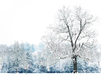 Winter art photography, tree photography, minimal, white - The Heart of Winter