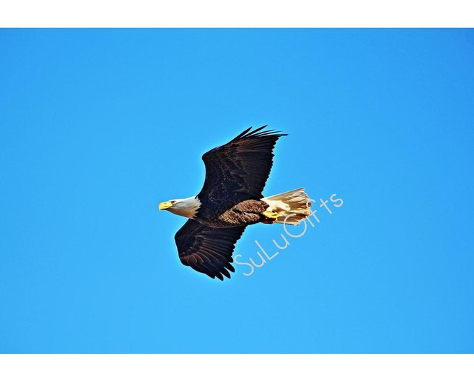 Eagle Soaring - Flying in Blue Sky - Digital Print