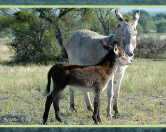 """Baby and mother burros, decorative green frame, photo note card, 5.5""""x4.25"""", blank."""