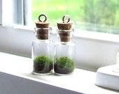 2 Terrarium Pendants,   MossTerrarium Pendants, Living Plant Pendant, Plant Necklace, Terrarium Jewelry