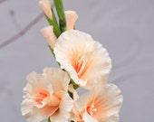 Crepe Paper Gladiolus Flower 18 inch stem