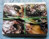 10 Labrador Cards and Envelopes - Ten Blank Cards - Matching envelopes  - Photography Cards - Labrador note cards, Labrador Stationery