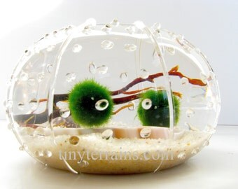 Marimo Terrarium: Marimo Moss Ball Glass Urchin Aquarium with Wooden Ball,  Several Different Colors Available