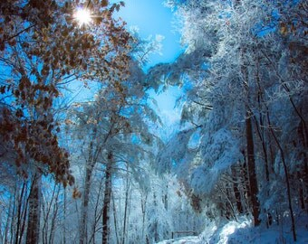 Snow, Tennessee Mountains, Ice Covered Trees, Sun Flare, Deep Blue Sky, Winter Fine Art Print