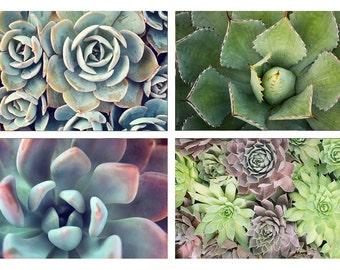 Gardening Gift, Succulent Art Print, Succulent Photography, Nature Photography, Succulent Photo, Southwest Art, Desert Art