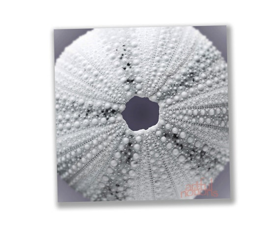 Sea Urchin Art, Blue Art, Seashell Photo, Bathroom Decor, Wall Art Teal, Fuchsia, Home Decor, Sea Shell Art, Square Print, Square Art