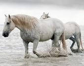 CAMARGUE HORSE - HERCULES, Pair of white horses, water, nautical equine, neutral, wall decor