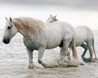 CAMARGUE HORSE - HERCULES, Pair of white horses, water, nautical equine, neutral, wall decor