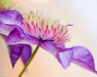 Digital download - flower photography  purple bright soft botanical art decor nature macro wall art modern minimalist zen warm floral art