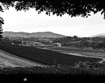 Temecula Wine Country -  8 X 12Print