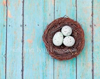 fine art photograph, 5x5 print, wall decor, nest, wood, vintage, eggs, color print