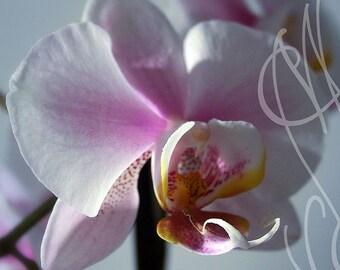 Orchidées #3 - 8x10 ( 20 x 27 cm) Fine Art Photograph