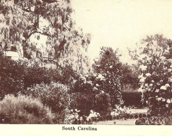 Vintage Postcard...South Carolina...Unused....no. 1581