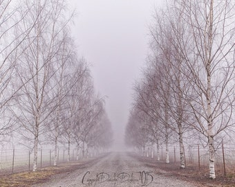 Landscape Photo   Oregon   Tree Pathway   Fog   Winter   Cold   Soft Colors