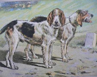 ANTIQUE 1907 Griffon Vendeen Nivernais hound French dog signed dog print Chromolithograph Mahler German artist Collector item Birthday gift