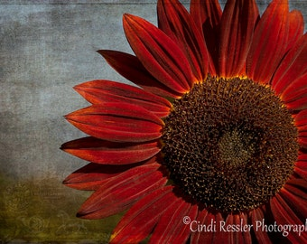 Primitive Sunflower, Photography,  Floral Photography