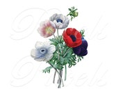 POPPY ANEMONES Instant Download, wedding clipart, summer, Large Digital Image botanical illustration Redoute 084