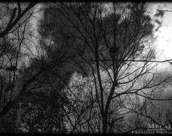 Black and White, Birds in The Trees, Taurus/Scorpio Full Moon, November, Samhain, Witches, Pagan wall art, Birds on branches, grainy
