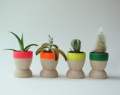 Wooden Mini Planters by Wind and Willow Home, Neon Rainbow, Set of 4, wedding favors, modern home decor, office gift