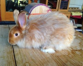 1 oz  Angora Rabbit Fiber Natural Fawn for Spinning, Carding, Felting
