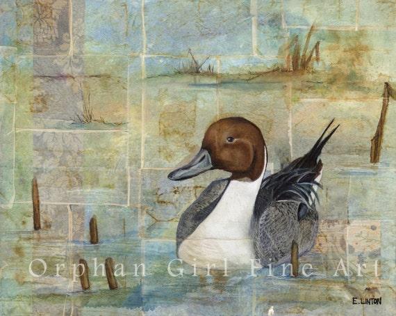 le canard pilet oiseau peinture oeuvres d 39 art oiseaux. Black Bedroom Furniture Sets. Home Design Ideas