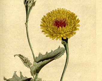 Botanical, Nature print, Nature, Botanical art, Flower print, Wall decor, Nature art, 142
