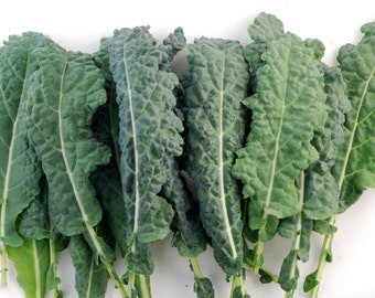 Heirloom Lacinato Kale, Blue Green Leaves, Excellent Raw or Cooked, 25 Seeds