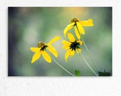 Nature Photography Dreamy Brown Eyed Susan Flower Photo Print Nursery Photography