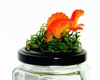 Dinosaur Terrarium Top Octagon Glass Jar