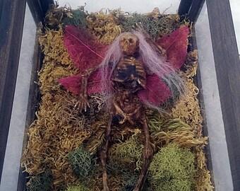 Mummified Fairy in Display Box