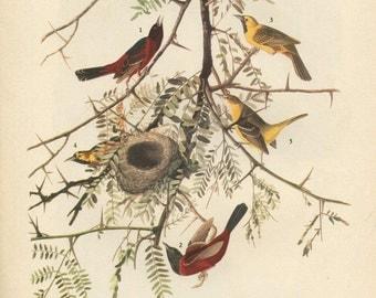 Old 1941 Antique Vintage Book JOHN JAMES AUDUBON - Birds of America - Antique Bird - Vintage Bird -  Orchard Oriole