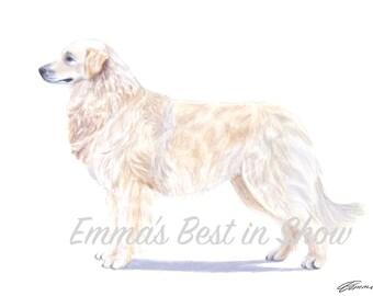 Kuvasz Dog - Archival Fine Art Print - AKC Best in Show Champion - Breed Standard - Working Group - Original Art Print