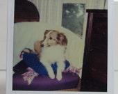 Vintage Polaroid Dog Collie Puppy Pet Color Photo