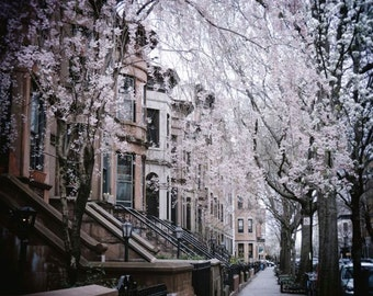 Spring - New York City - Flowering Tree - Brownstone Brooklyn NY - New York Cityscape -  Beautiful Street - Architecture - Nature Spring Art