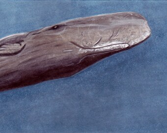 Sperm Whale Bookmark