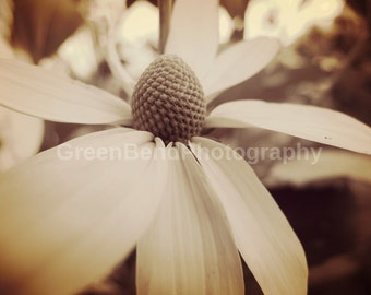 summer flower photography. nature. pure .soft
