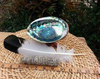 Small Shasta (Blue) Sage Smudging Kit ~  Shasta (Blue, Desert) Sage Bundle 4 inches, 5~6 inch abalone shell with tripod stand, feather