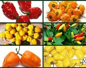 Hot for Hotter Peppers 6 Pk Special - Heirloom Hot Peppers, Heirloom Habanero Seed, Tabasco Pepper Seed, Scotch Bonnet Pepper, Non-gmo Seeds