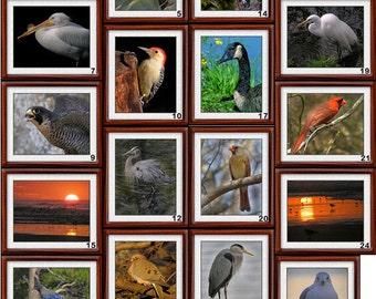 8x10 Bird Photographs - 8x10 Bird Prints - Nature Photographs - Nature Prints (BPRNT)