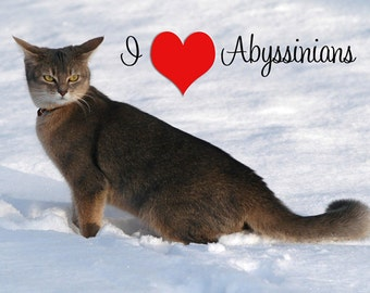I Love Abyssinian Cats Fridge Magnet 7cm by 4.5cm,