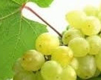 Grape Seed Oil 8 fl oz (240 ml)