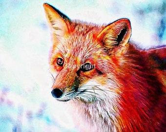 Fox - Print Run of 100