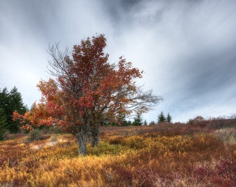 The Red Twins- Fine Art Landscape Photograph. Dolly Sods Photographic Print. Fall Colors.