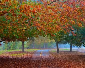 Fall Trees Fiery Autumn Wall Art, Fall Rustic Decor, Foggy Road, Fall Leaves Trees, Red Orange Trees, Fall Foliage, Fine Art, 9 x 14 print