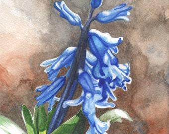 Hyacinth, ORIGINAL watercolor painting, FREE shipping